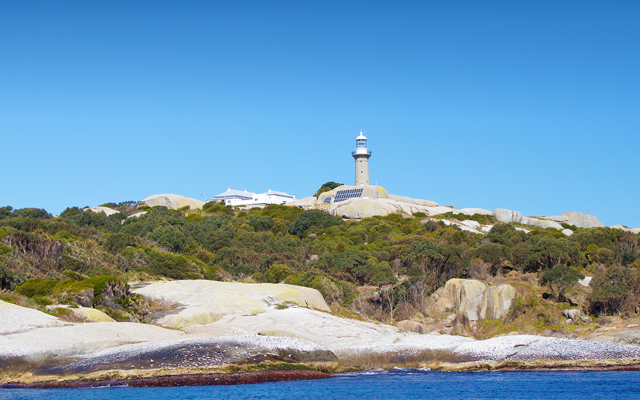 Montague Island Tours with Narooma Charters