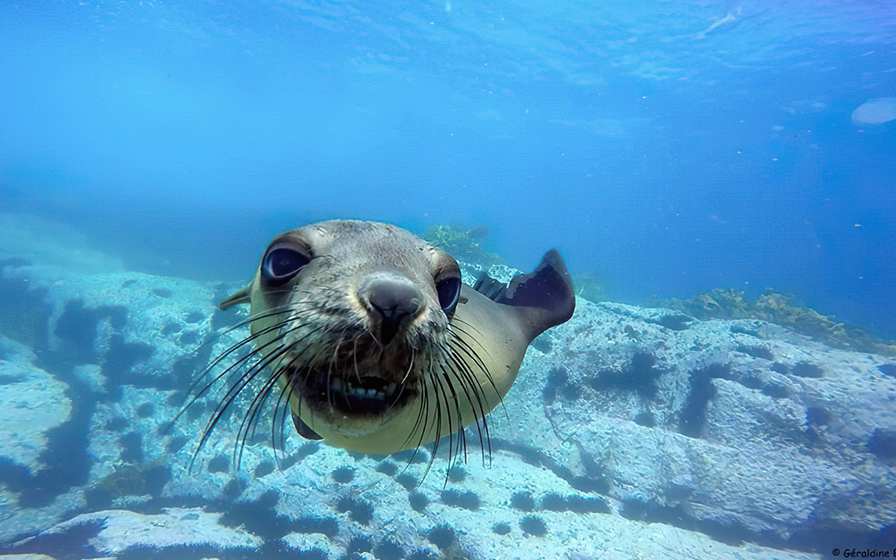 Dive with Seals with Narooma Charters