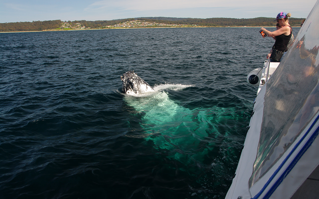 Whale Watching with Narooma Charters